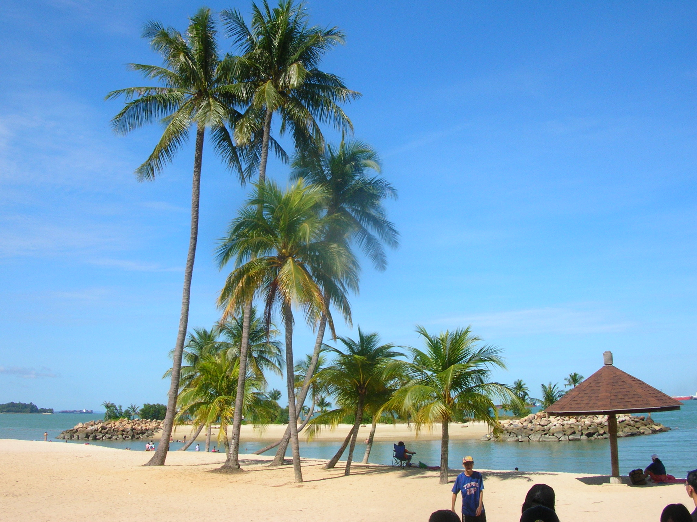 Tanjong-beach-palm-tree-Sentosa
