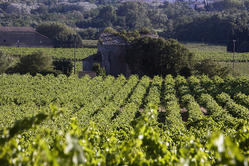 wine regions in Northern France
