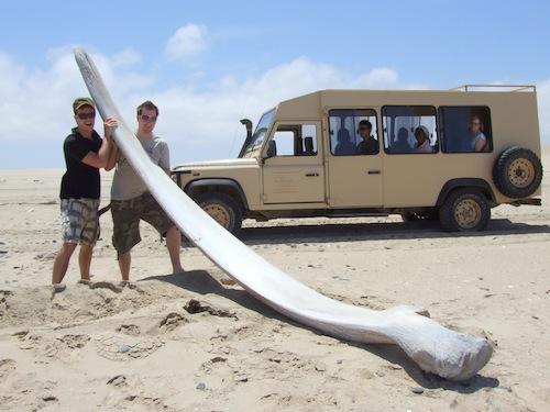 Whale bone on the Skeleton Coast